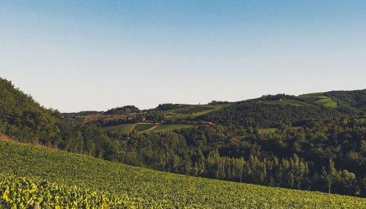 Seleção Grandes Vinícolas: Castellani Winery