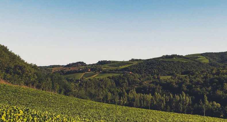 castellani winery visual