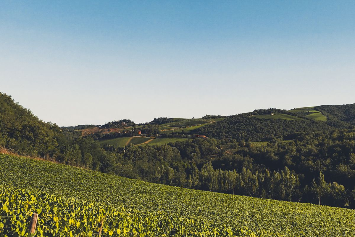 castellani winery visual