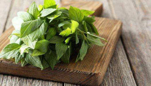 Como conservar manjericão fresco? Veja nossas dicas!