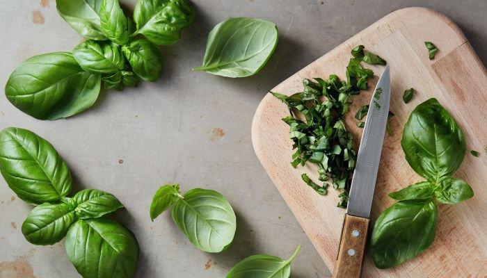 como conservar manjericão fresco cortado