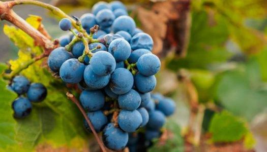 Seleção Grandes Vinícolas: Familia Zuccardi