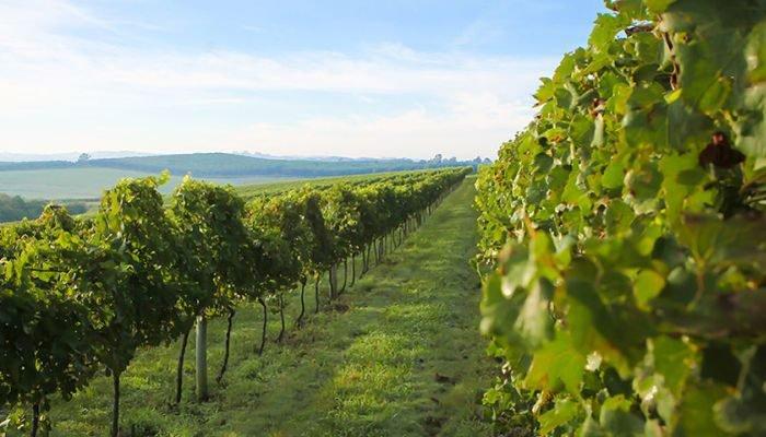 vinícola salton parreiras
