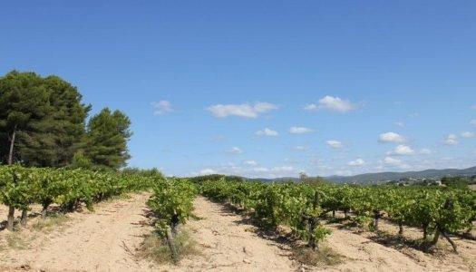 Seleção Grandes Vinícolas: Bodegas Pinord