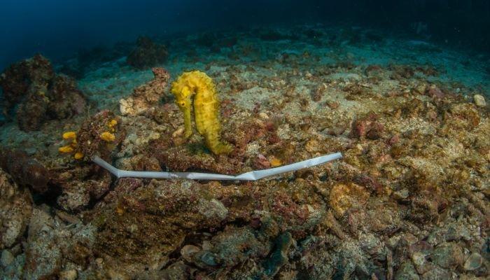 canudo ecológico mar