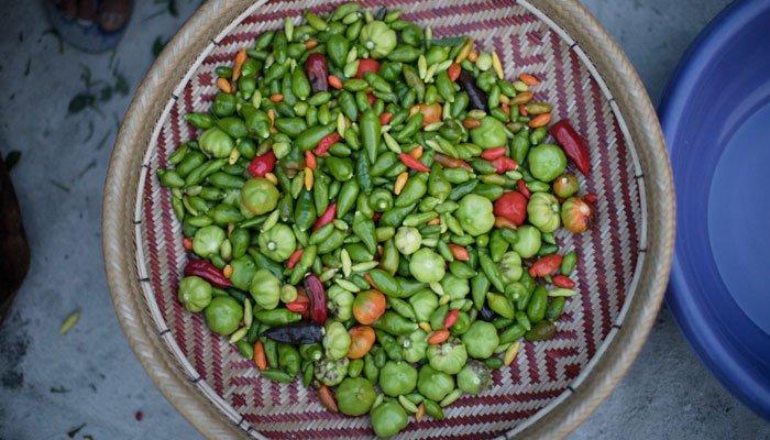 mulheres baniwa pimenta