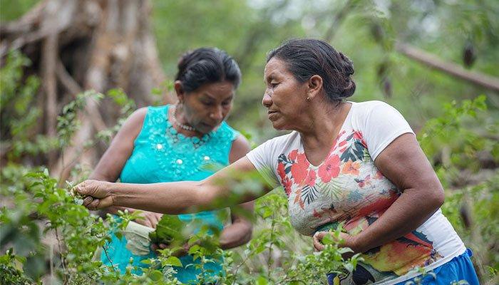 mulheres baniwa produção