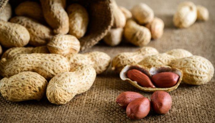 o que são oleaginosas amendoim