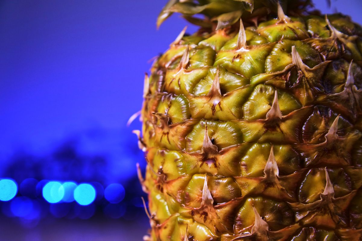 casca do abacaxi capa
