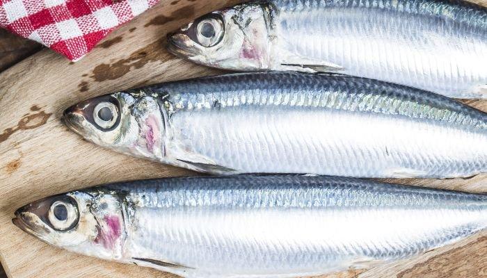 alimentos ricos em cálcio sardinha
