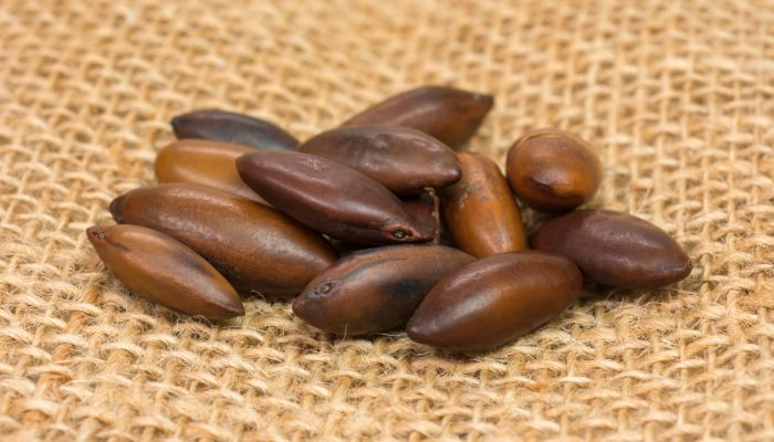 castanha de baru semente comestível