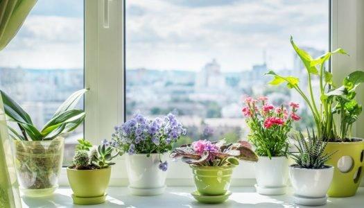 Plantas para a casa: veja 16 sugestões