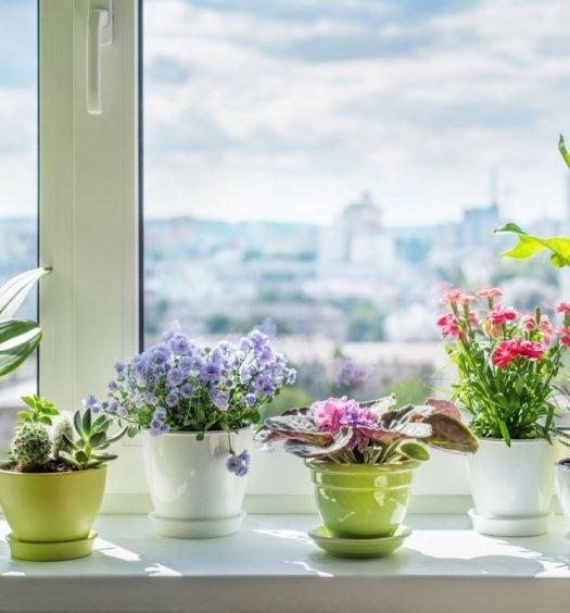 plantas para a casa capa