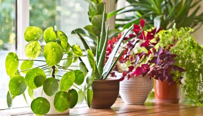 plantas para a casa intro