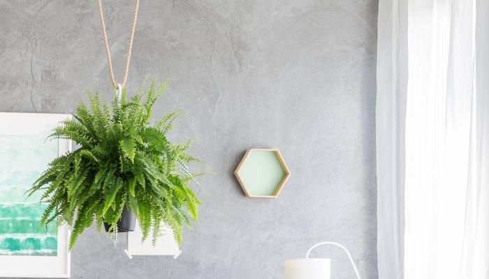plantas para a casa samambaia