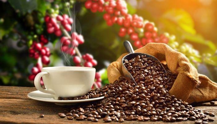 microlotes de café pé