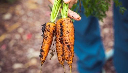 Certificação de alimentos: o que é e o que ela significa para o consumidor