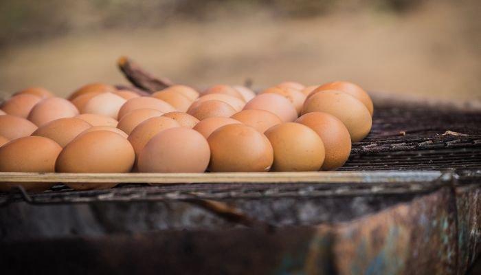 tipos de ovo comum