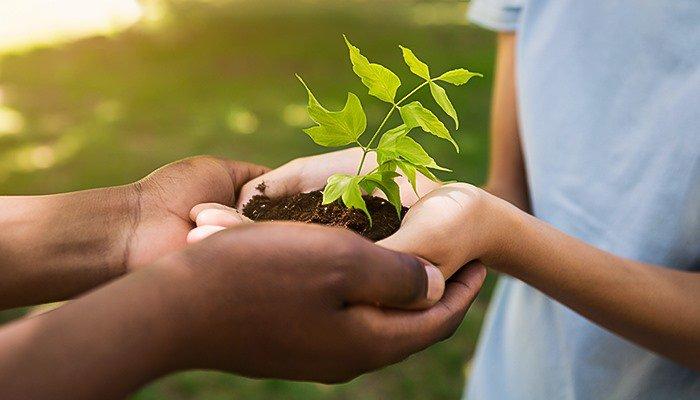 plantas mãos